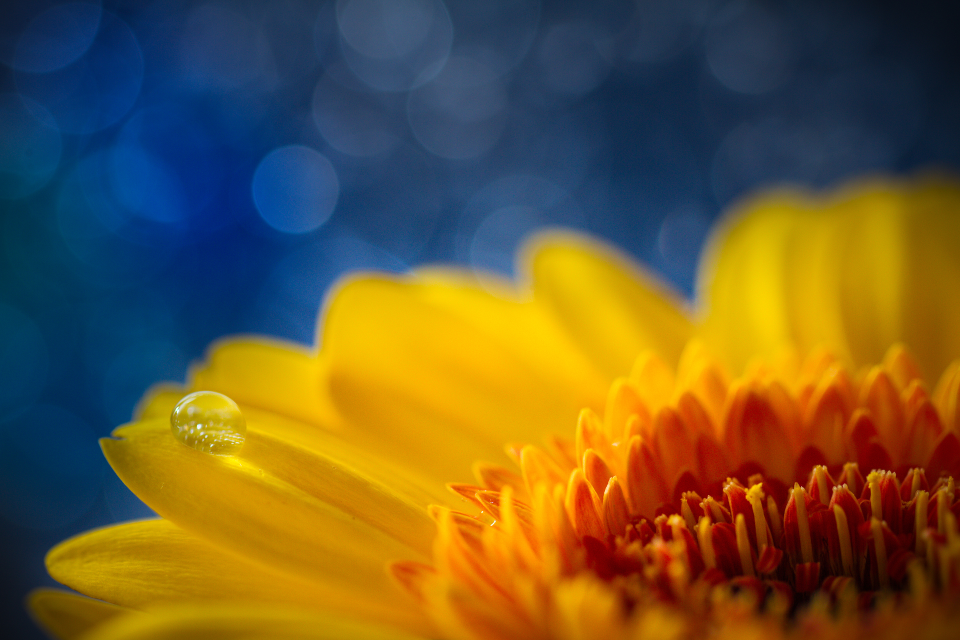 Sunshine Flower